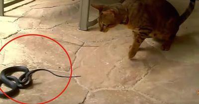 Unerwünschter Besuch: Hund und Katze kämpfen Pfote in Pfote!