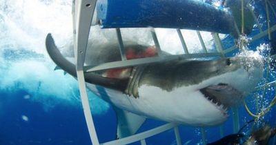 Diese Haiattacke ist absolut...süß!
