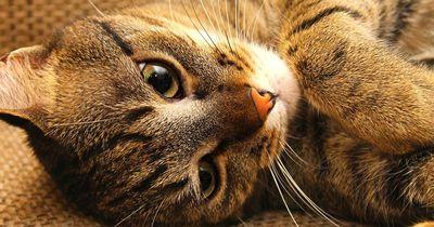 Warum die Katzen nicht im Bett schlafen sollten...
