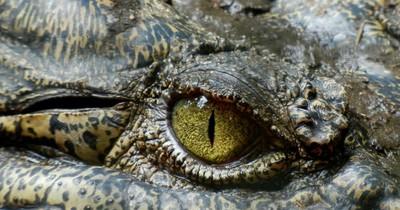 Diese Kreatur wurde im persischen Golf entdeckt.