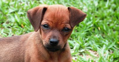 Versicherung für den Hund - brauche ich das?
