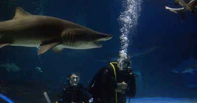 Diese Hai-Attacke ist der Wahnsinn