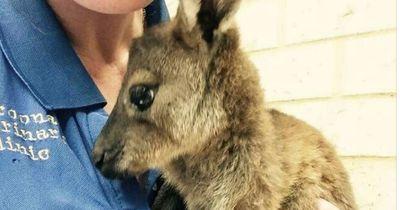 Diese süßen Tiere wurden nach einem Buschfeuer lebendig gefunden