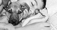 Die To-Do Liste eines Hundes vor seinem Tod