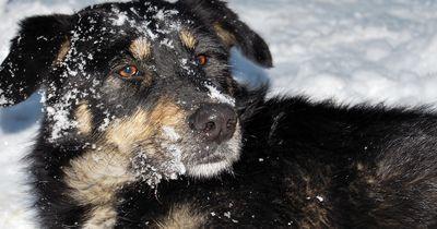5 unersetzliche Tipps für Hundebesitzer im Winter!