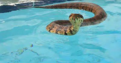 Rettung in letzter Sekunde - diese Schlange hatte unheimliches Glück!