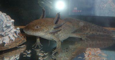 10 neulich entdeckte Tierarten