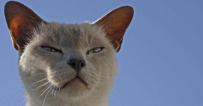 Das denkt Deine Katze wirklich über Dich!