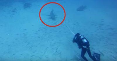 Dieser Hai hat eine Bitte an den Taucher!
