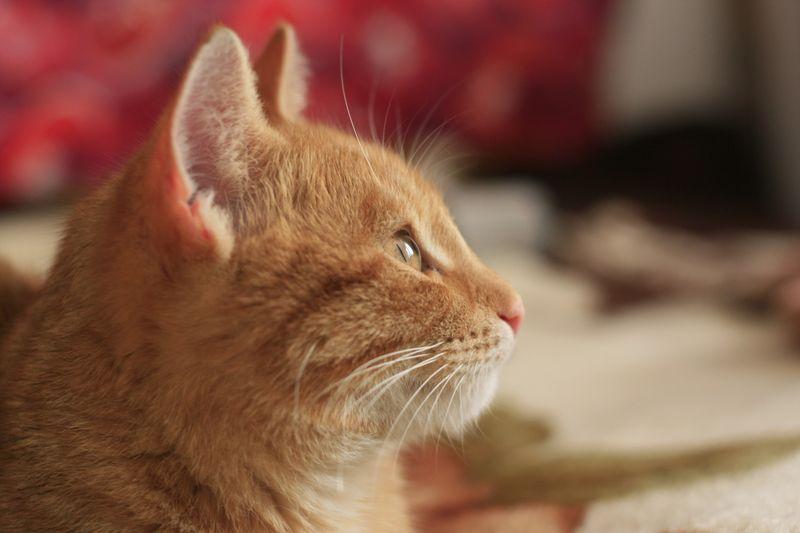 Diese Katzen haben eine merkwürdige Obsession!