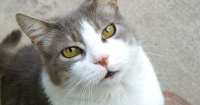 Diese Katze weiß nicht, was sie tun soll...