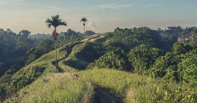 Diese Fakten über das Dschungelcamp kanntest du bestimmt noch nicht