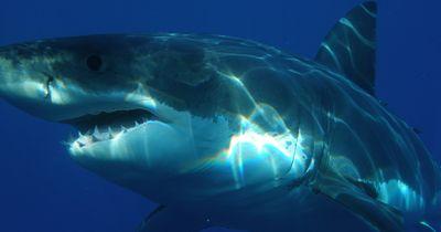 Surfer von Hai attackiert