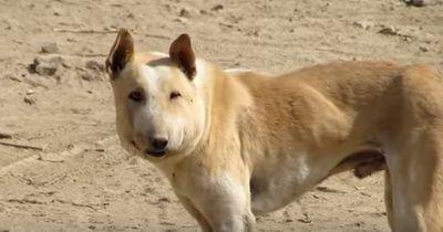 Der Hund sieht aus wie ein Schwein & hat ein schreckliches Geheimnis!
