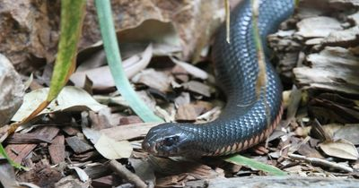 Das sind die gefährlichsten Tiere Australiens!