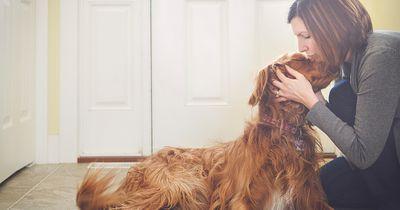 ACHTUNG: Wenn dein Hund DAS macht, ist er sehr krank!