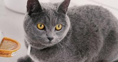 5 Dinge, die deine Katze in LEBENSGEFAHR bringen!