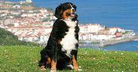 5 unersetzliche Tipps beim Reisen mit dem Hund!