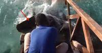 DIESES Unterwassertier springt vor die Touristen