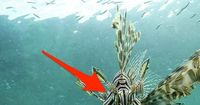 Giftig, schmerzhaft und tödlich: Diese Tiere solltest du im Wasser meiden!
