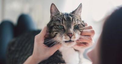 Finger weg: Diese 5 Dinge hasst deine Katze!