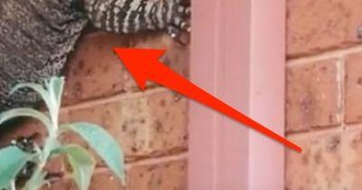 Dieser Mann hat Godzilla an seiner Hauswand
