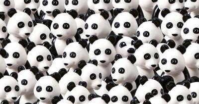 Siehst du den Hund unter den Pandas?