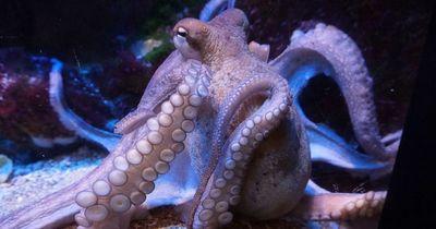 Skurril und faszinierend: 7 Fakten über Kraken!