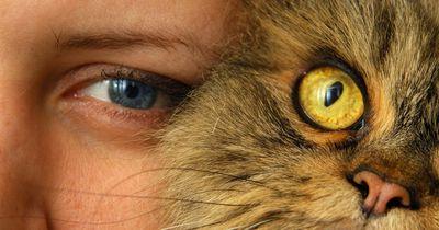 Immer wenn du deine Katze berührst, tust du etwas Gutes für deine Gesundheit!