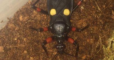 Diese 9 Insekten sind gefährlich und einige sogar tödlich!