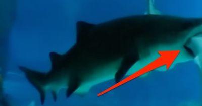 Schock im Haibecken