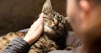 Macht deine Katze diese 6 Dinge, liebt sie dich wirklich!