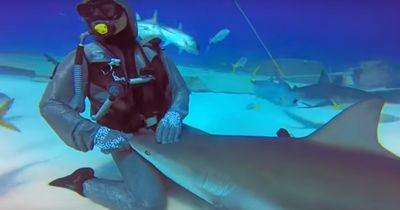 """Einer der tödlichsten Haie der Welt """"greift"""" an!"""