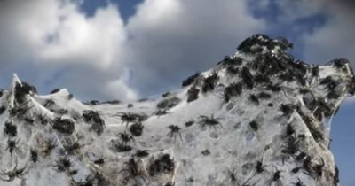 Horrorvorstellung für die Menschheit: Plötzlich regnete es Spinnen!