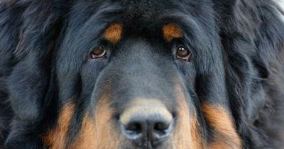 Quiz: 99 % kennt diese seltenen Hunderassen nicht, UND DU?