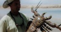 10 furchteinlösende prähistorische Insekten
