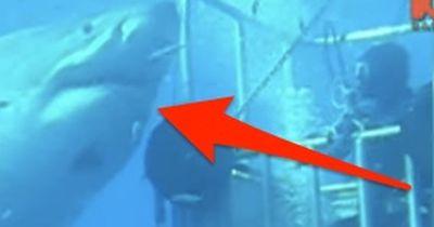 Er berührt den größten Hai der Welt!