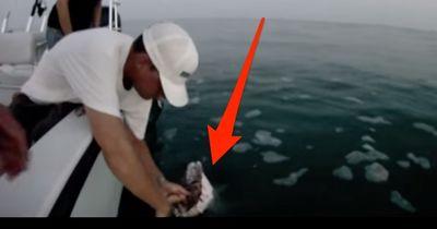 26 Millionen Menschen haben es gesehen: Die krasseste Haiattacke auf Youtube!