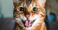 Woran erkennst du, dass deine Katze glücklich ist?