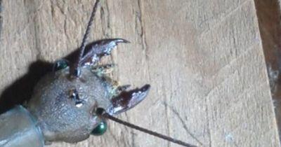 Unheimliches Insekt in China entdeckt!