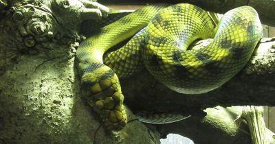 Diese Schlangenfakten sind echt krass!