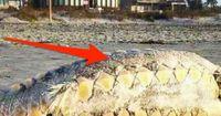 13 mysteriöse Kreaturen, die man am Strand fand
