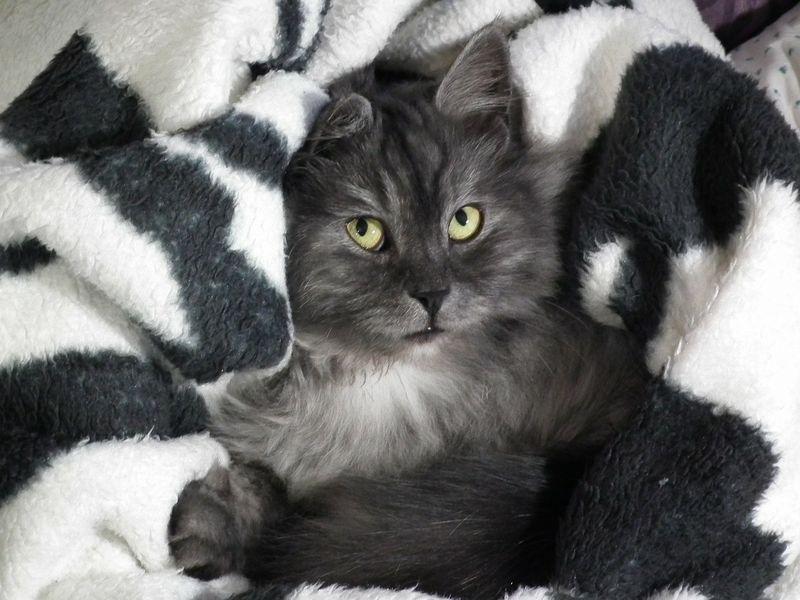 Der Beweis: 7 Gründe, warum du verrückt nach Katzen bist!