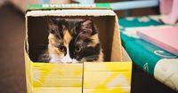 Was du wissen solltest, bevor du eine Katze kaufst