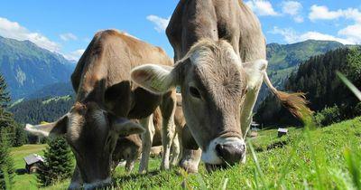 6 tierische Fakten, von denen du dir wünscht, sie nie gelesen zu haben!