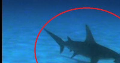 Als ein Hammerhai ihn attackieren wollte, erhielt er unerwartete Hilfe!