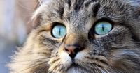 Wieso hat deine Katze eigentlich so komische Augen?