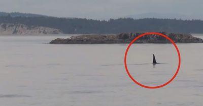 Mysteriöse Kreatur frisst einen großen Hai!
