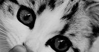 10 Dinge, die nur Katzenbesitzer über Katzen wissen!