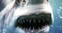 Die 10 tödlichsten Tiere der Welt